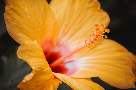Grote gele bloem