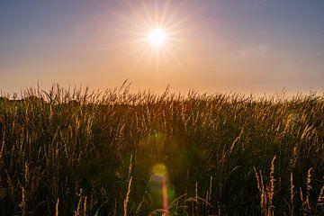Zonsondergang over het moeras van Frank Kuschmierz