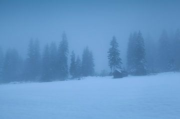 Deep winter sur Olha Rohulya