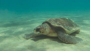 Zeeschildpad in Zakynthos von Daniëlle van der meule