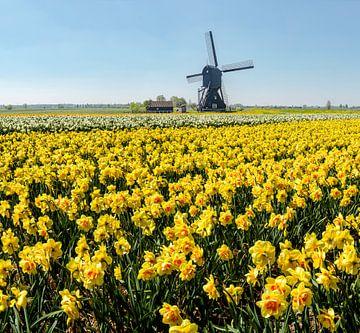 Windmühle mit Feld von gelben Narzissen, Niederlande, Trick, Montage von Rene van der Meer