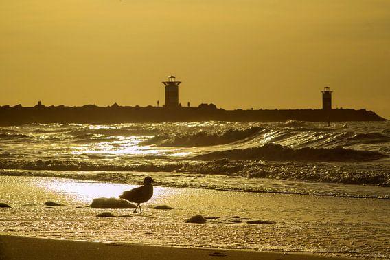 Met zicht op de haven van Scheveningen