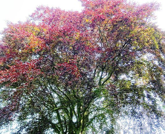 Tree Magic 132