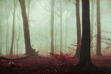 Waldruhe von Dirk Wüstenhagen