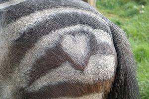 Paarden hart van