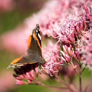 Macro de papillon sur des fleurs roses