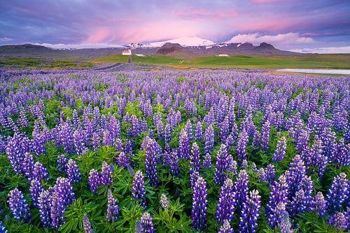 Zonsondergang bij Ingjaldshólskirkja, IJsland van