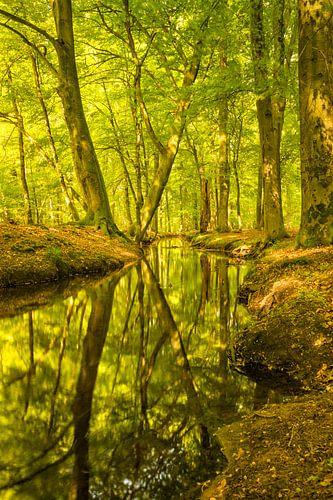 Leuvenumse beek in de vroege herfst
