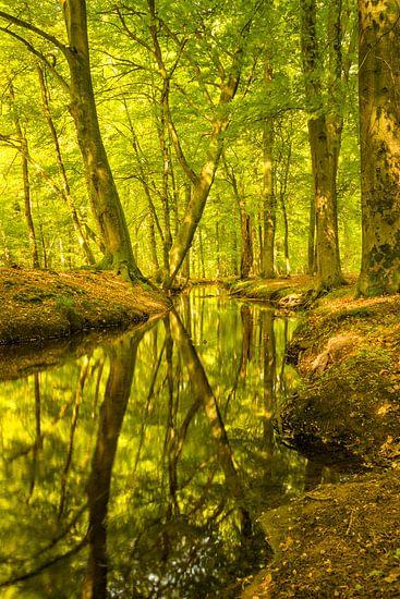 Leuvenumse beek in de vroege herfst van Sjoerd van der Wal
