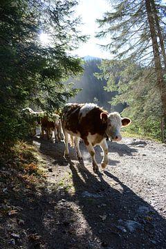 Koe in Zwitserland van Mylène Amoureus