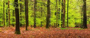 Lente bos van