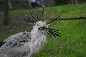 Secretarisvogel van Jacqueline De Rooij Fotografie