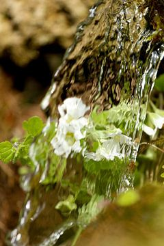 Waterval en bloemen von s Zenki