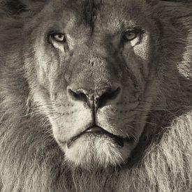 Portret van een leeuw van Ellen van Schravendijk