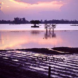 Reisfelder - Mekongdelta - Vietnam van Silva Wischeropp