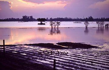 Reisfelder - Mekongdelta - Vietnam von Silva Wischeropp
