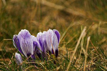 Bloem in de lente von T. van der Kolk
