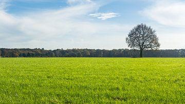 Verstilde boom van Hilda Weges