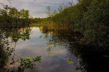 Een klein meertje in De Wieden op een zomeravond
