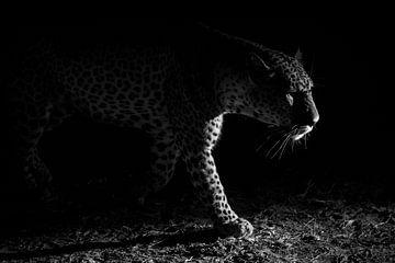 Luipaard nacht jacht, Hannes Bertsch van 1x