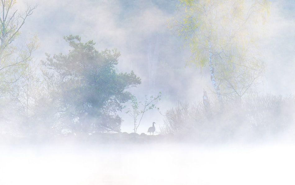 gans in de mist