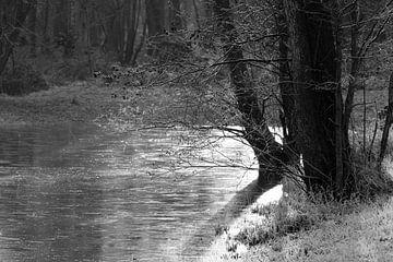 Gefrorener See in einem Winterwald von Robbert De Reus