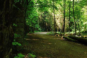 Road through forest near Eyneburg, Kelmis von Armand L'Ortije