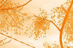 Yellow fruit van Edith van Aken