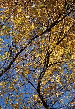 Herfst  van Annabel van Wensveen