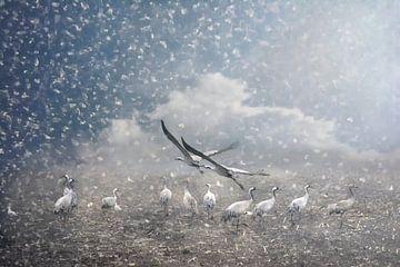 the cranes of Fischland van Joachim G. Pinkawa
