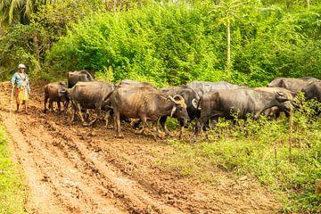 Der Landwirt und seine Kühe von Nicole Nagtegaal