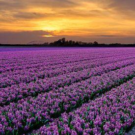 Blumenfeld im Frühling von eric van der eijk