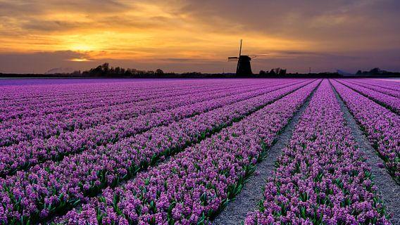 bloemenveld in de lente