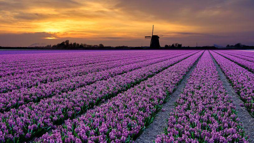bloemenveld in de lente van eric van der eijk