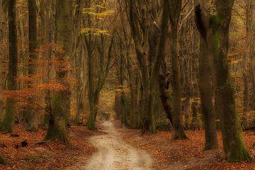 Herbst von Moetwil en van Dijk - Fotografie