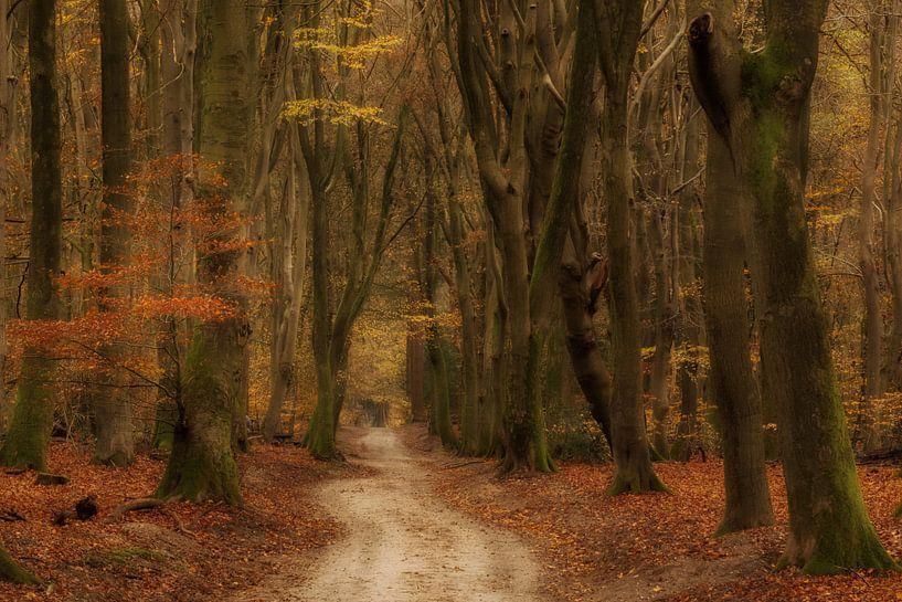 Herfst van Moetwil en van Dijk - Fotografie