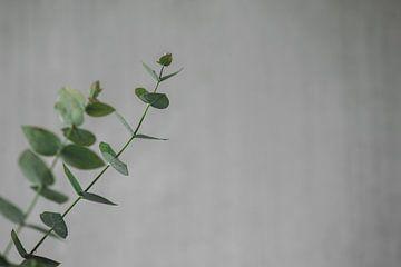 Eukalyptuszweig von Monique de Koning