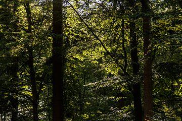 Im Wald van Rolf Pötsch