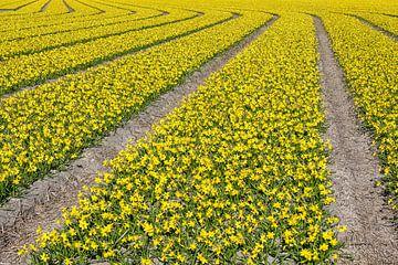 Linien auf den Blumenfeldern von eric van der eijk