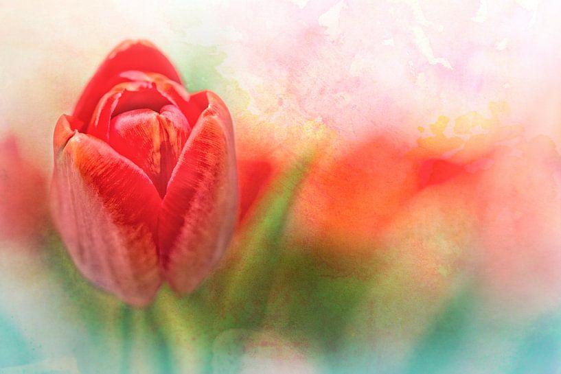 Tulpen, een cadeautje van tante Joke van Bob Daalder