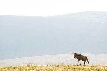 Eenzame Gnoe in de Serengeti van