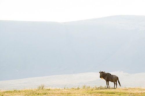 Eenzame Gnoe in de Serengeti