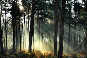 Verdwaald in het bos.. von Benjamin van de Grift