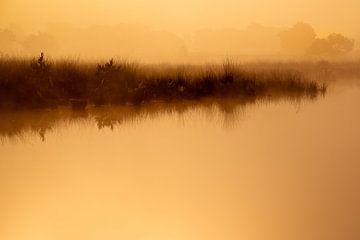 Strabrechtse Heide 229 van Desh amer