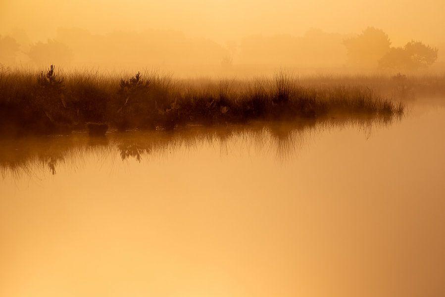 Strabrechtse Heide 229