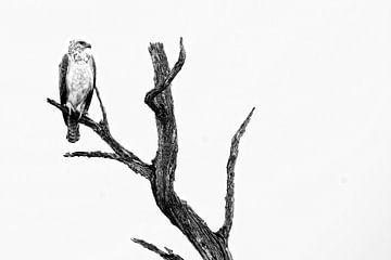 Vechtarend zwart-wit fotografie van