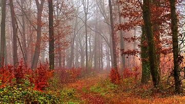 Nature's Colors 2 van Caroline Lichthart