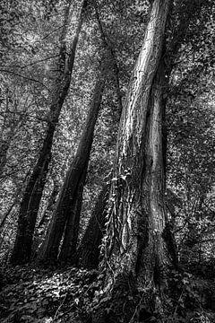 Magischer Baum von Carla Vermeend