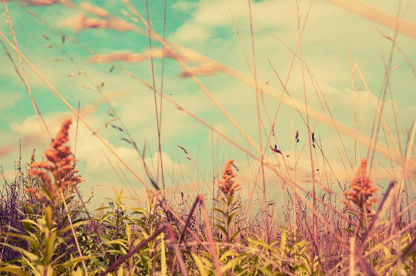 Summer  von Nathalie Labrosse
