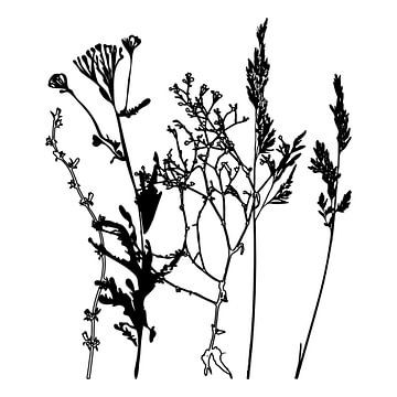 Botanische illustratie met planten, wilde bloemen en grassen 9.  Zwart wit.